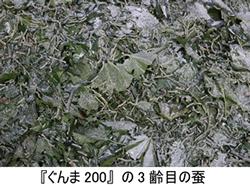 『ぐんま200』の3齢目の蚕